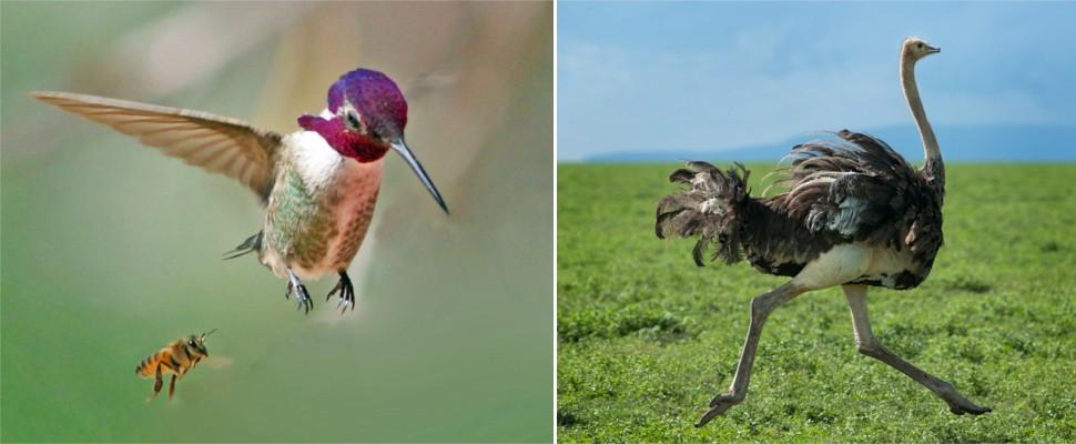 Фото самых маленьких птиц в мире