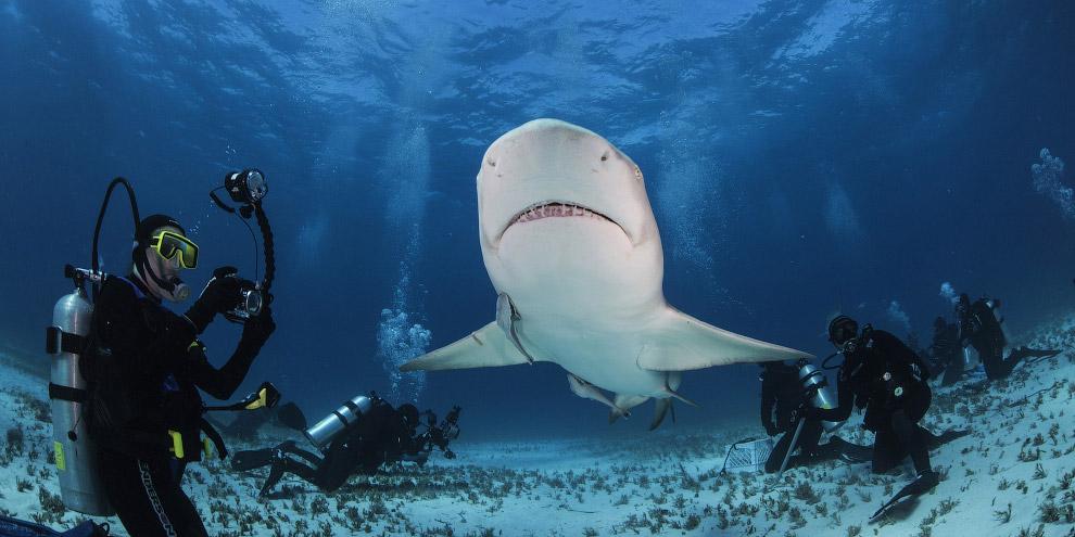Книга рекордов самая большая акула в мире